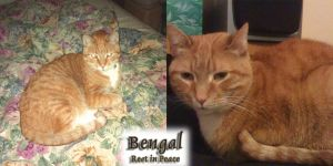 Rest In Peace Bengal by Crazdude