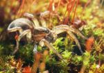 Spider is walking on moss by Dipsiwow