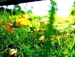 More Grass by jutto