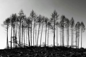 Galloway Forest: survivors by Coigach