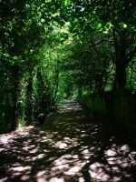 Carr Mill Path by happinessdragon