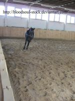 Horse Lunging 02 by Bloodsoul-Stock