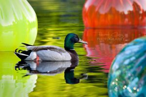 Swimming in Colors by RHCheng