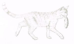 Calligraphic Cat by Francoise-Evelyne