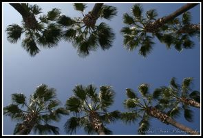 Palm Trees by DarkestFear
