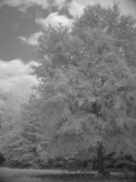 Under the shade tree - iR by redtailhawker