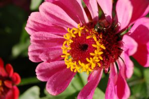 pink_yellow_bug_flower by jrbamberg