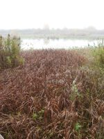 Dead Marshes Swamp 2 by GreenEyezz-stock