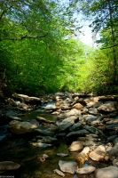 Forest Stream 02 by tharkins