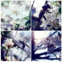 .springscape. by candymax