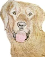 Golden Retriever Sketch by Audiocracy1976