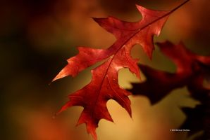 Autumn Leaf 5 by DorianStretton