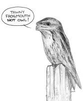 Tawny Frogmouth by Practicecactus