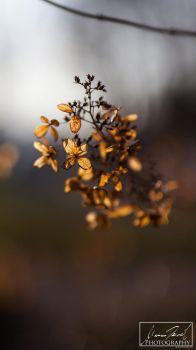 Withered Beauty by MariaDeinert