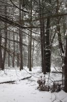 Snow and Woods -1 by mjranum-stock