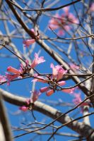 Pink and Blue by amm081