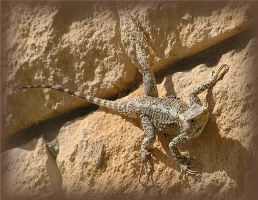 agama by Kutaly