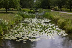 Small Pond 2 By Cindysart-stock by CindysArt-Stock