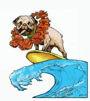 Surfing PUG Safari color by lancgodwin