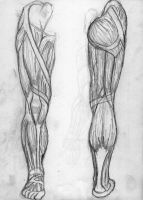 Study of muscles in the leg by demonsuccubus