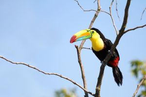 Toucan on the lookout. by RVeldhuyzen