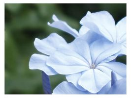 Light Blue flower closeup by KawaiiUniverseStudio