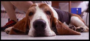 Dumbo the Basset by no-reaction