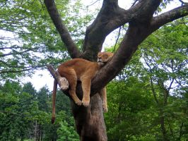 Hangin' Around by spyed
