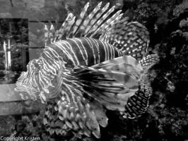 Lion Fish by Know-The-Ropes