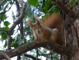 Squirrel 190 by Cundrie-la-Surziere