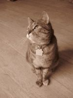 Sepia Cat by gothicgrl104