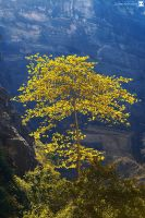 the yellow tree by sultan-alghamdi