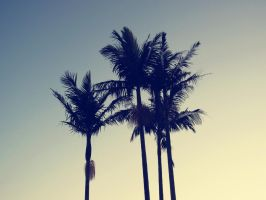 Palm Tree Summer by transparent24