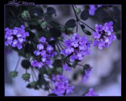 Blooming in fall by ShlomitMessica