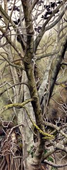 Radagast the Brown by peet