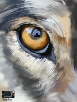 Speedpaint - Eye of Wolf - Quick Photo Study by danielbogni