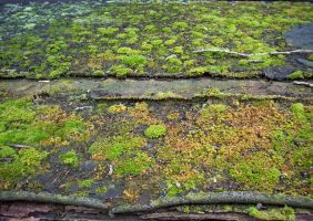 Moss by jaqx-textures