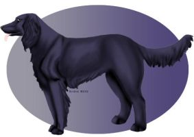 Blue Picardy Spaniel by tailfeather