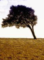 The Last Tree by Bazz-photography