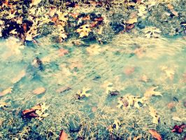 water and leaves by secondhandxheroine19