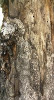 Tree texture, skin on muscle tissue. by NizinLopez