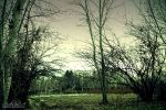 Dark Woods II by ArDesHIr-a