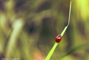 good morning Ladybird by ememl