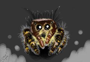 Jumping Spider by LilLynne
