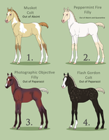 Foal auction WINNERS by Mendokusee