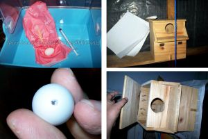 Fake eggs and fixing a nest box by emmil
