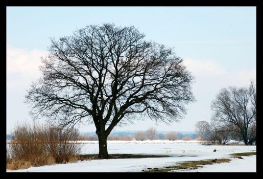 Tree at the Elbe by Indirie
