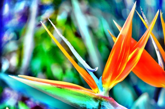 The Bird Of Paradise by iskarlata