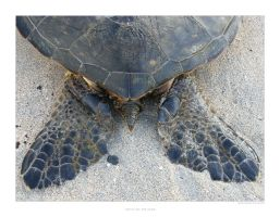 Turtle on the Sand by SpicyHamster