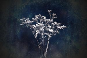 blue rhapsody by awjay